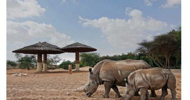 Al Ain Zoo Rhino Conservation